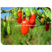 Frutos secos chinos Ningxia China bayas de goji 250/280/350/380/500/750 / wolfberry secado al sol, bayas de goji orgánicas secas