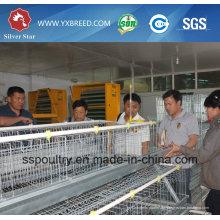 Silver Star automatische Schicht Huhn Käfig System