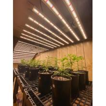 Phlizon 640W Samsung Full Spectrum Grow Bar