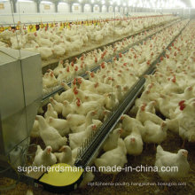 Poultry Control Shed Equipment for Breeder