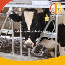 Cow Headlocks cow farm equipment