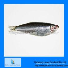 Sardine de fruits de mer fraîches à vendre