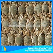 Promotion de la vente de crabe de boue congelée
