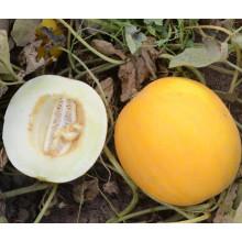 HSM26 Fwiqi белой мякотью,круглые, оранжевый гибрид F1 сладкий дыни семена