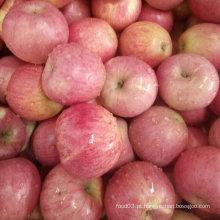 Golden Fornecedor de Fresh Red Qinguan Apple