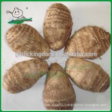 New fresh taro/Natural taro/new crop Chinese taro