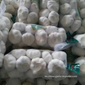 Fresh Garlic 1kg mesh bag 10kg carton