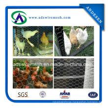 2015 Hot Sale! ! Galvanized Hexagonal Chicken Wire Mesh