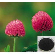 Extracto de trébol rojo / Trifolium Pratense Extracto / Trifolirhizin de alta calidad