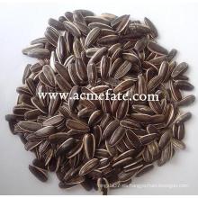 Semillas de girasol granos de girasol