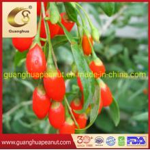 Healthy New Crop New Fragrance Best Quality Organic Dried Goji Berry