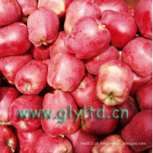 De Boa Qualidade Fresh Red Delicious Apple, Huaniu Apple