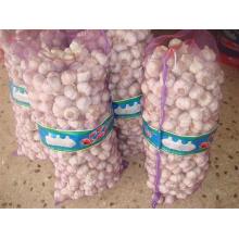 Fresh Crop Marketable White Garlic
