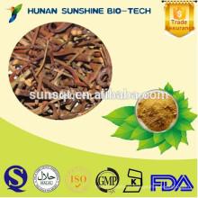 100% Natural Gambir Plant Extract 5% Alkaloids