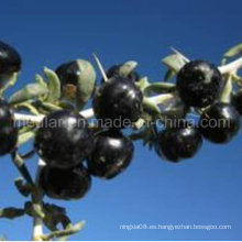 Medlar Nature Ningxia Black Wolf Berry