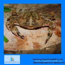 Fournisseur congelé de crabe de boue