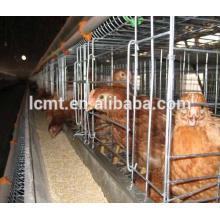 Sistema automático de gaiola de frango para aves de capoeira