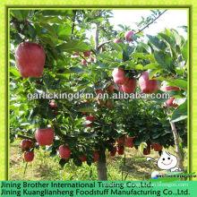 20kg cartón huaniu manzana