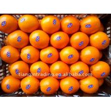 chinesischer Navel orange