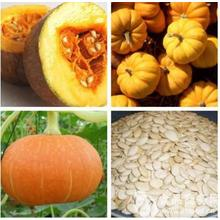 The Benifits of Pumpkin Seeds P.E