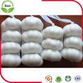 4.5 ~ 6.0 Cm Fresh Pure White Garlic