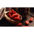 Baía de Goji Goji Orgânica, Wolfberry Chinês, Medicina Tradicional Chinesa
