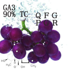 Regulador de crescimento de planta do ácido Gibberellic do GA 3 90% Tc