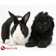 Meet EN71 and ASTM standard black rabbit plush toys
