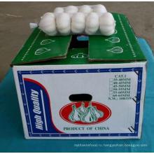 2016 Китайский свежий нормальный белый чеснок 5.5-6cm