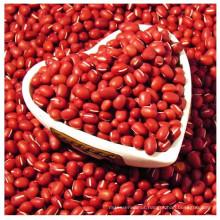adzuki beans slice tea