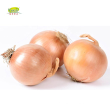 Export Container Chinese Specification Fresh Yellow Onion Price 1Kilogram Per Metric Ton for malaysia