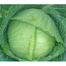 HC04 Шиба теплостойкие,Сплюснутостью зеленый гибрид F1 капусты семена
