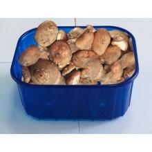 FDA Approval Custom-Made Different Types PP Mushroom Tray
