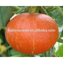 MPU05 Jinhong híbrido naranja redondo semillas de calabaza para plantar