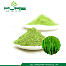 Semprotkan 100% Bubuk Wheatgrass Natural 100%
