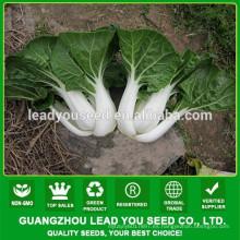 Venta al por mayor de semillas de col china NCC03 Sufe, semillas para campo abierto