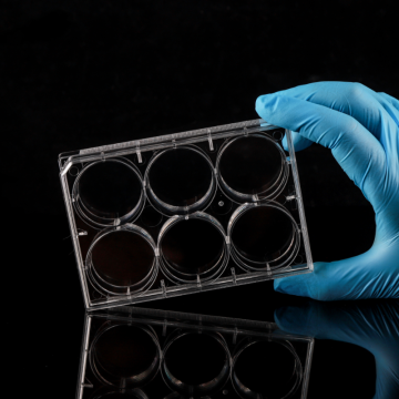 TC-Treated 6 well Cell Culture Plates