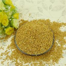 2012 new crop,Well choose Glutinous white broom corn millet