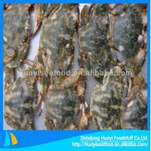 Crabe de boue congelé bon fournisseur et exportateur