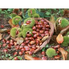 Greenfarm Chestnut Low Price