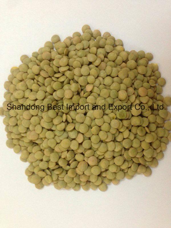 2016 New Crop Green Lentils