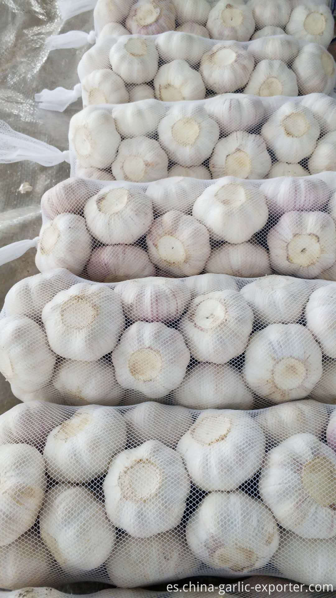 Jin Xiang New Crop Garlic Price Hot Sales