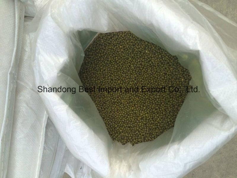3.2mm 3.6mm 3.8mm Green Mung Beans
