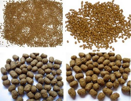 Fish Meal for Animal Feed with Competitive Price