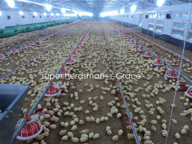 Layer Raising Equipments with Chicken House