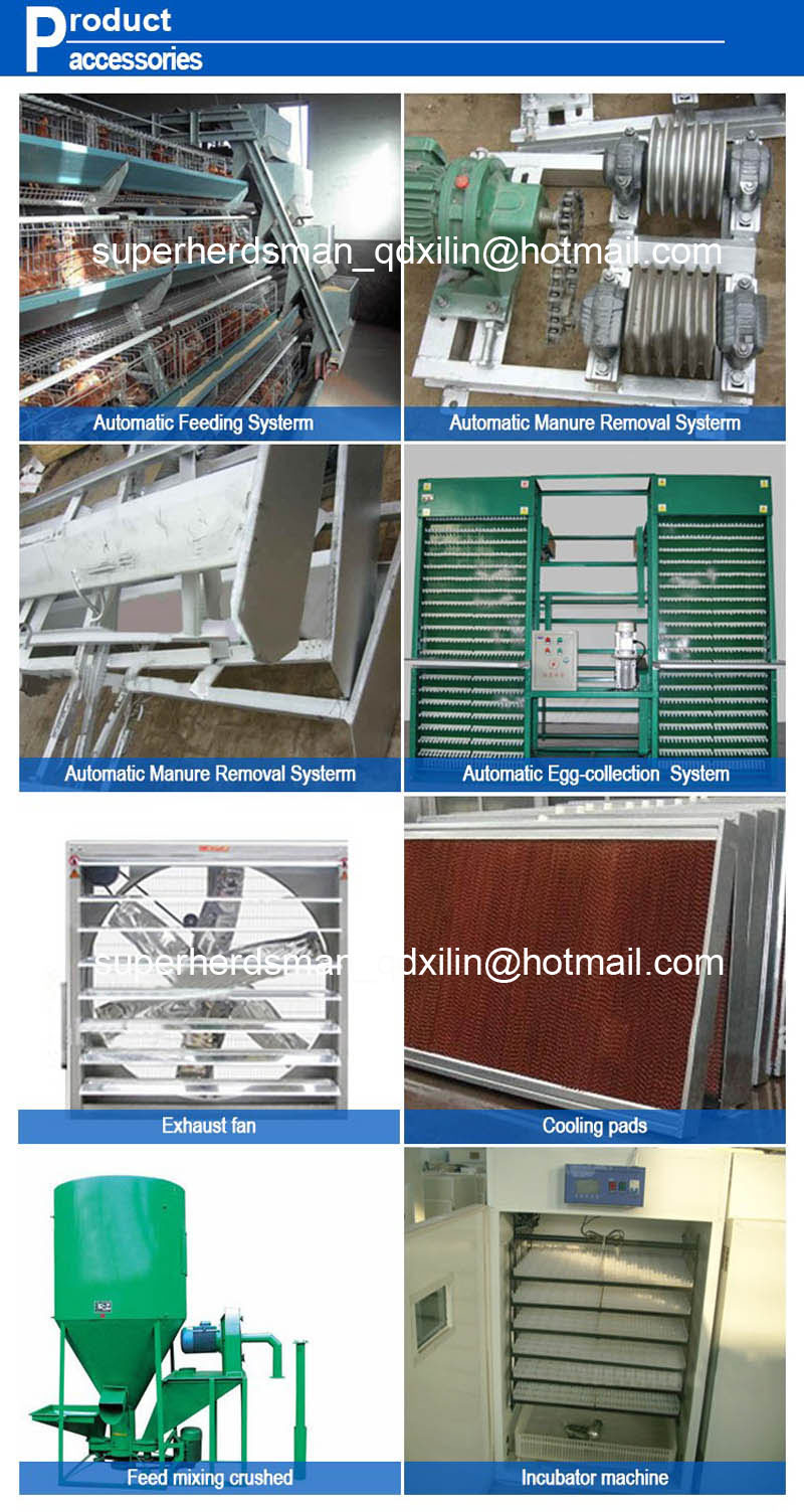 Automatic Layer Chicken Shed with Full Sets Equipments