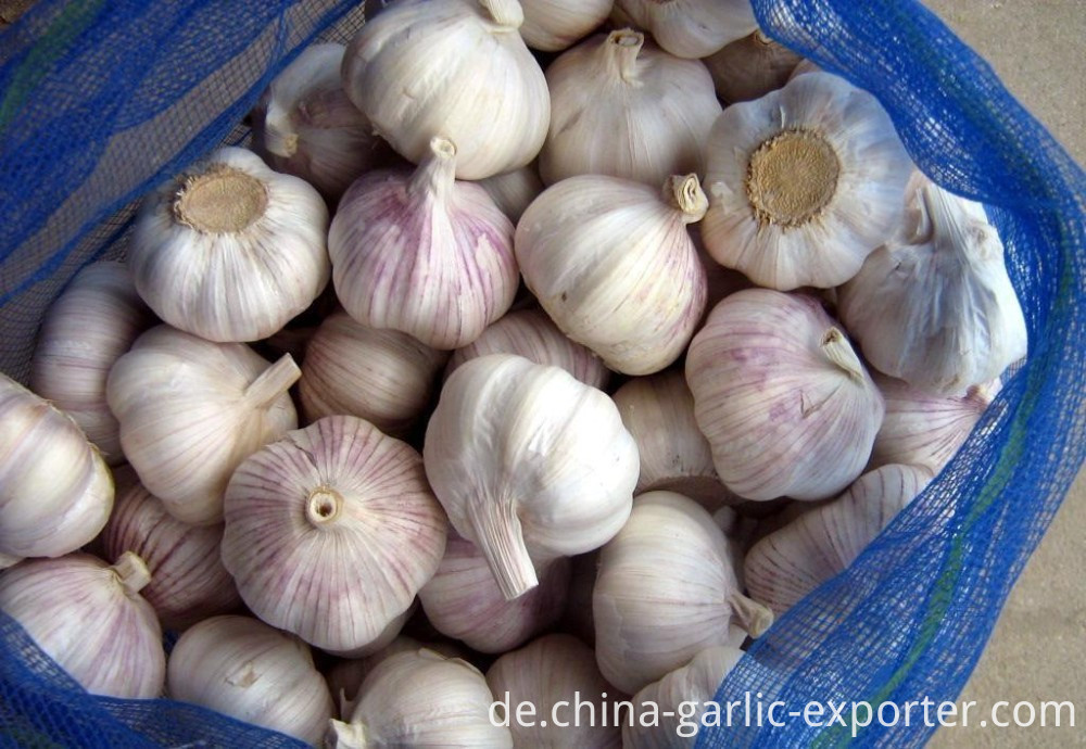 Fresh Peeled Garlic Clove Low Price