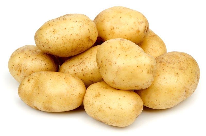 2016 Shandong Province Winter Crop Fresh Potato