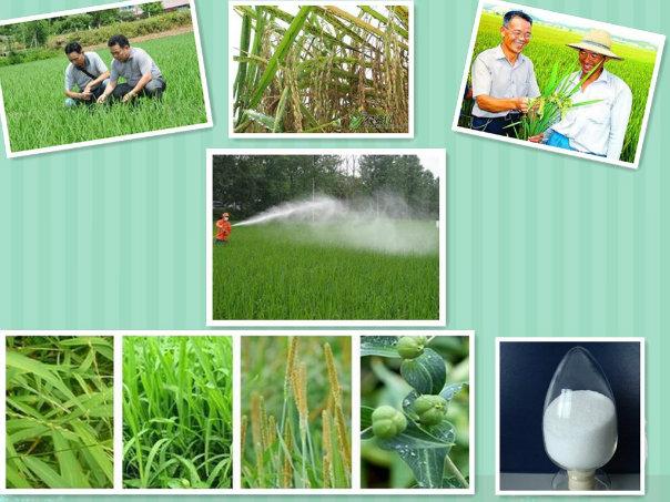 Bactericide Fungicide (CAS: 156052-68-5) 95% Tc Zoxamide