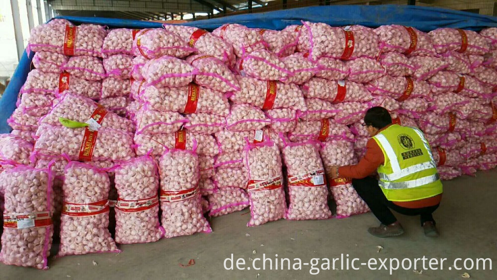 Cheap and good fresh garlic in 10kg bags